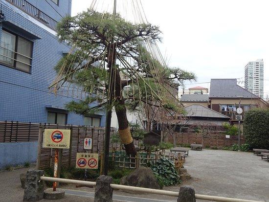 Pine Tree Square