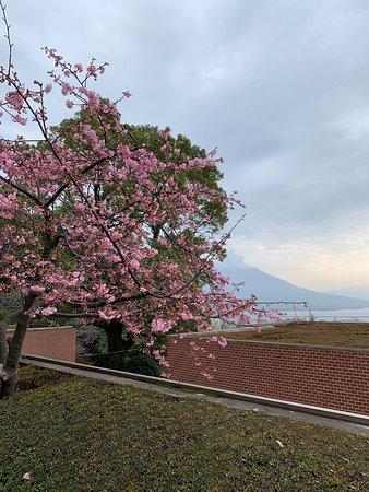露天風呂からの桜島の眺めが最高