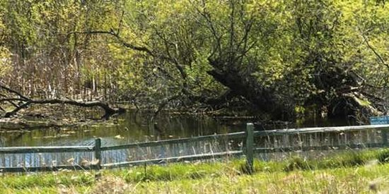 Four Seasons Nature Preserve