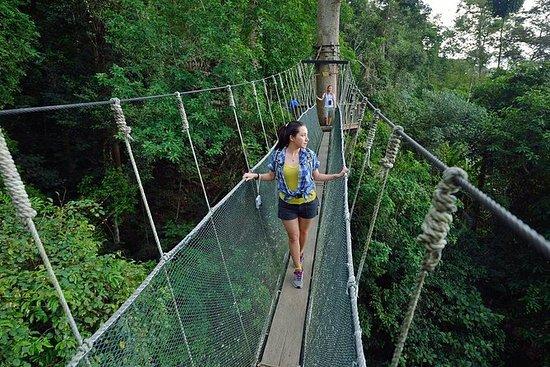 Kinabalu Park & Poring Hot Springs...