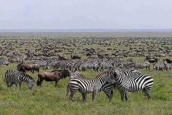 6 Days.Call of the Wildlife Safaris