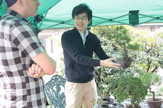 Esperienza pratica con i bonsai nella