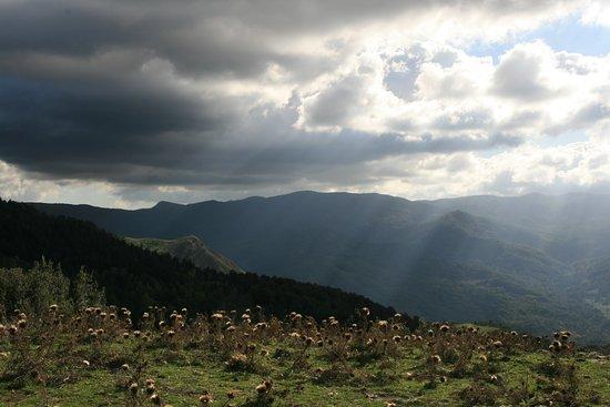 Longi, Italie : au milieu des vaches et moutons