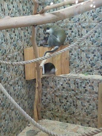 Sakhalin Zoo: Молодая мама ухаживает за дитём