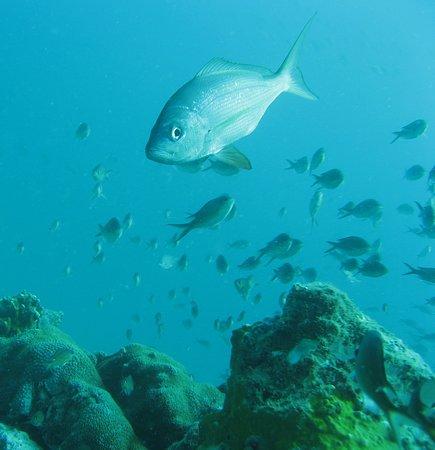 Maio, Πράσινο Ακρωτήριο: fond sous- marin