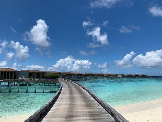 Pool - Park Hyatt Maldives Hadahaa Photo