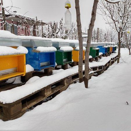 San Giorgio Piacentino, Italië: Le api sotto la neve