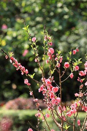 Baiyun Mountain's spring flowers