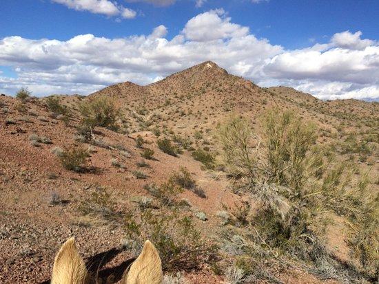 Yucca Photo