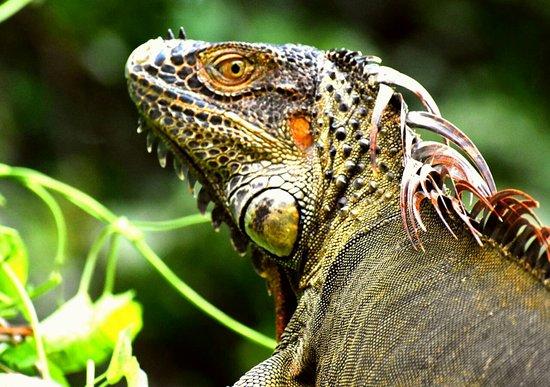 Tortuguero, Kostarika: Agouti Tours