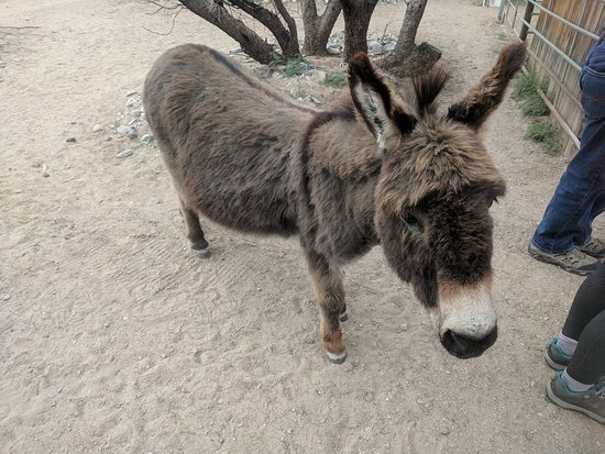 Forever Home Donkey Rescue