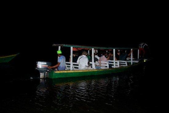 Veille de nuit des alligators
