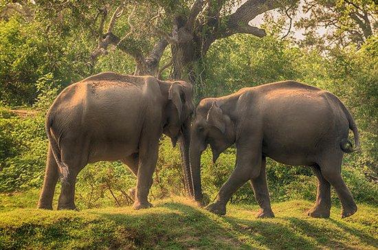 14 Days Scenic Explore Lanka