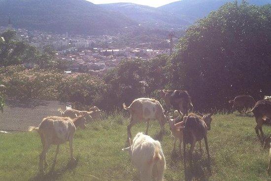 Organic Local Farm