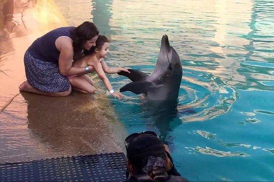 Spettacolo Dolphinarium di Dubai