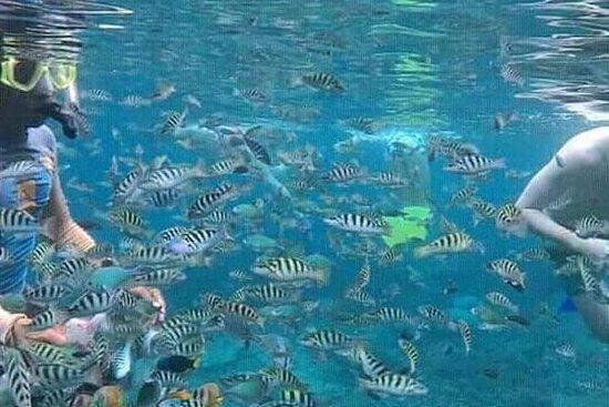 Snorkeling e Monkey Bar Almoço com...