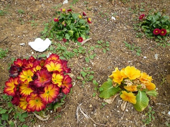 Toyoko Flower Green Way: 緑道脇に飢えられた花たち