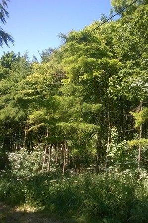 Pocklington, UK: View into the trees