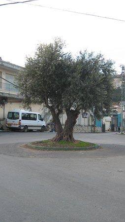 בית ג'אן, ישראל: כיכר עם עץ זית בדרך לצימר בצל הדובדבן