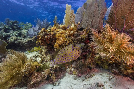 A short distance from Miami, Florida, go underwater on a guided tour in Biscayne National Park to see colorful coral reefs and fish. PC: NPS/Shaun Wolfe