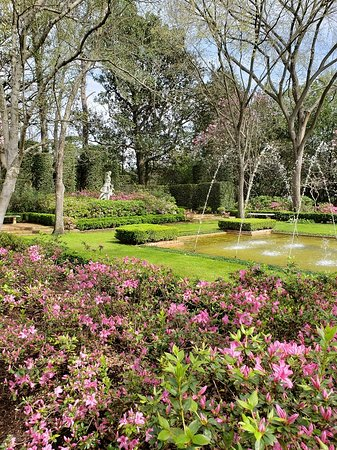 Flowers Starting To Bloom Picture Of Bayou Bend Collection And