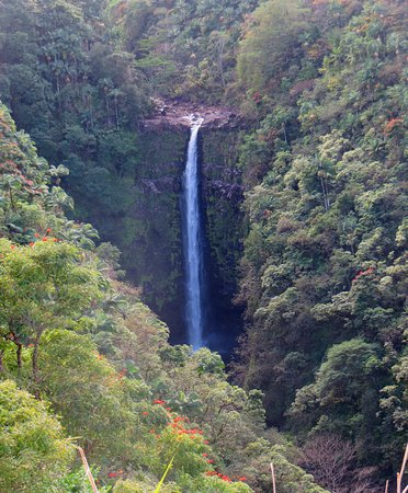 Hilo Zipline over KoleKole Falls: The final, 250-foot-tall waterfall.  The zipline runs from the other side of this gorge, above the falls, and swoops across in the same direction as the stream flows, so that the view of the falls opens up beneath you as you go.  Stunning!