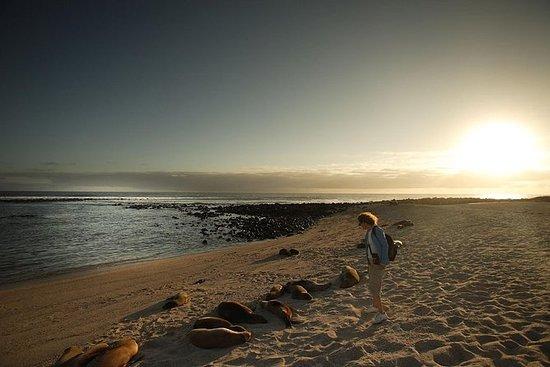 Excursão em Tortuga Bay e Cruzeiro de...