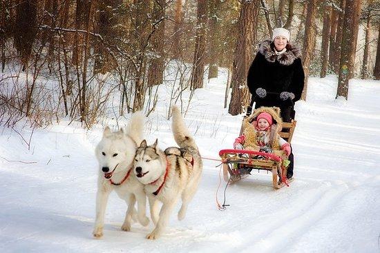 圣彼得堡冬季彼得夏宫之旅和阿拉斯加雪橇犬雪橇