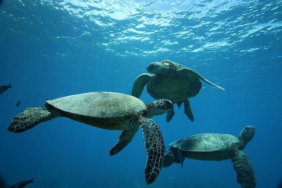 12pm Turtle Canyon Snorkel Adventure