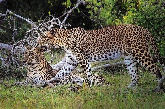 6 Days Scenic Wild Camp Sri Lanka