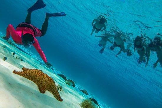 Snorkel Cozumel Reef: Palancar