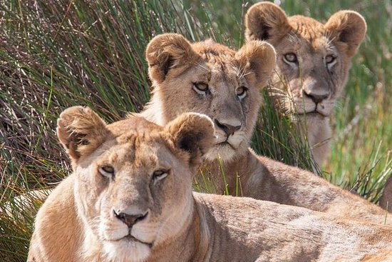 Tanzania Safari - Den stora ...
