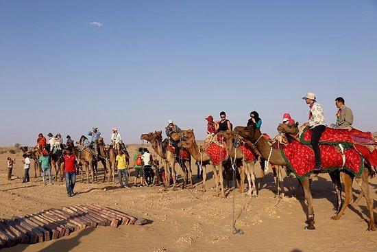 FORFAIT TOUR DE SAFARI AU CAMEL