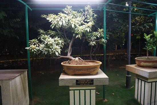 Bonsai Garden Picture Of Vuda City Central Park Visakhapatnam Tripadvisor
