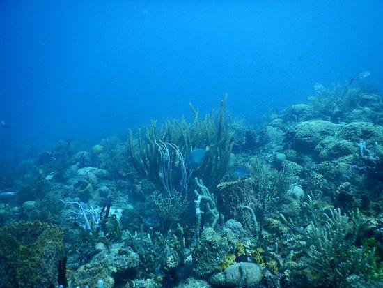 Bequia: Devils Table reef