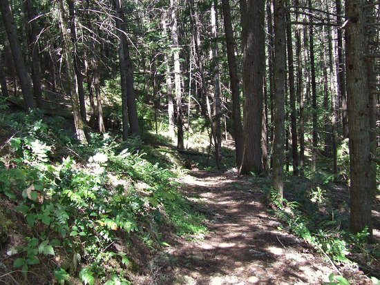 Oakridge, OR: Varied trails