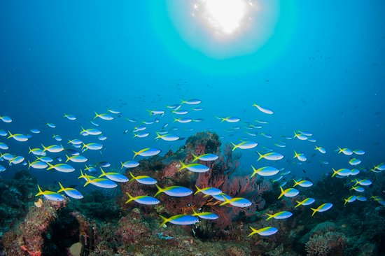 Duke of York Islands, Papúa Nueva Guinea: Diving Kabakon Point always busy with a large variety of marine life!