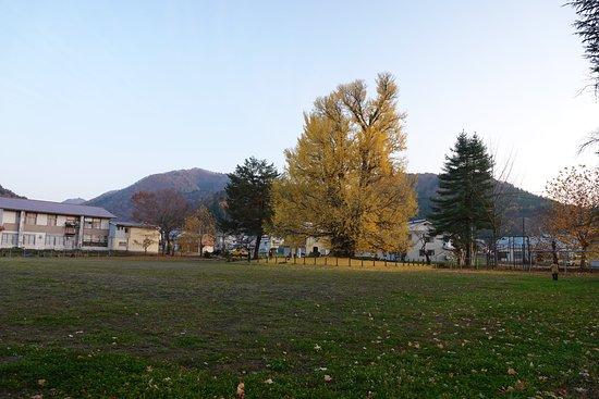 Furumachi no Oicho