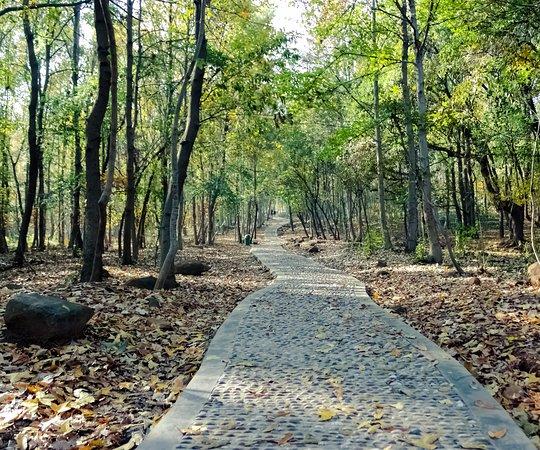 Shushan Forest Park (Hefei)