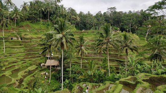 Bali Wonder