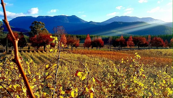 Porepunkah, Australia: Autumn's coming, time to book our next lunch at Feathertop...