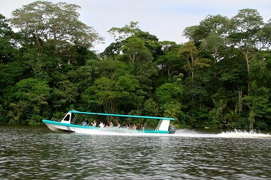 Tortuguero One Day From San José