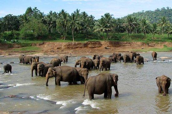 Excursión a Pinnawala, Peradeniya y...