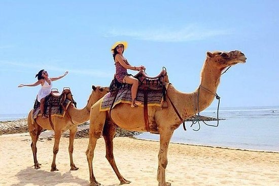 The Best Private Trip With Camel...