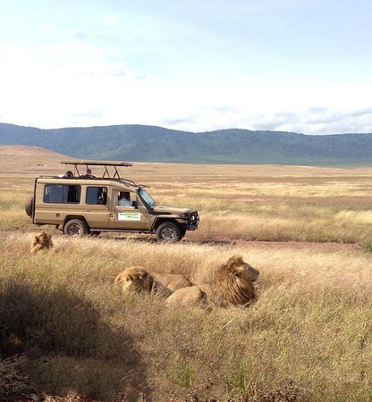 Magnificent Safaris