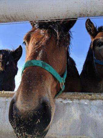 Banei Horse Ranch Tokachi