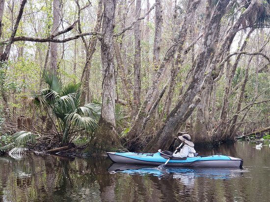 Fort Mc Coy, FL: These are some fotos of our float down the Ocklawaha River.