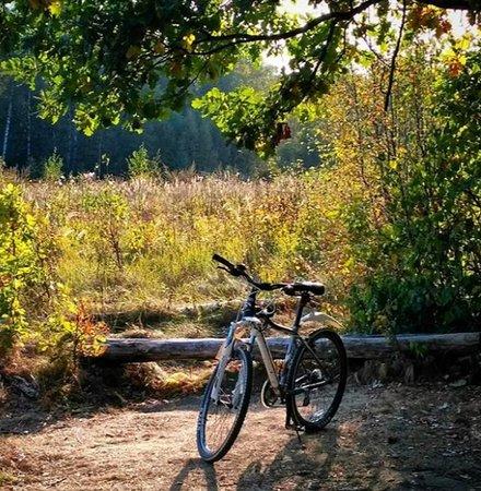 Ski and Bike Rental