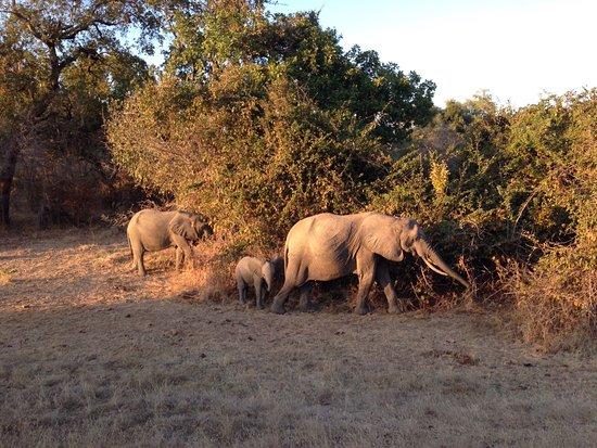 Mpika, Zambia: Nel cuore dell' africa, un fiume che alimenta e protegge una natura fuori dal tempo. Indimenticabile.