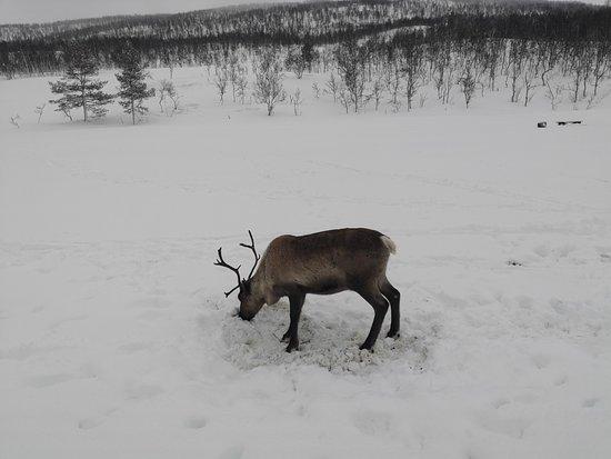 Bardufoss ภาพถ่าย